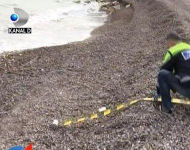 VIDEO | Invazie de droguri pe litoral! Politistii lucreaza non-stop ca sa faca fata...