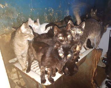 VIDEO   41 de pisici, tinute captive într-un apartament din Capitală! Erau la limita...
