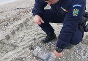 Peste 150 de kilograme de droguri, găsite în ultimele zile pe litoralul Mării Negre