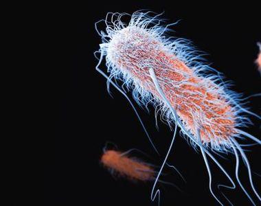 VIDEO | O bacterie periculoasa, pentru care nu s-a gasit inca tratament, ar putea...
