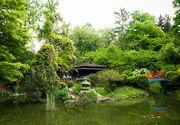 VIDEO | Cauti locuri de relaxare? Gradina Botanica din Cluj e locul ideal!