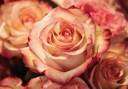 Afacerile cu flori devin din ce în ce mai profitabile!