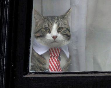 Ce se întâmplă cu pisica lui Julian Assange, după ce acesta a fost arestat