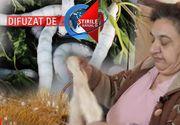 VIDEO| O industrie in care pe vremuri excelam - cea a viermilor de matase - se zbate acum sa supravietuiasca