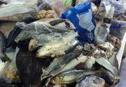VIDEO | Alerta in pietele din toata tara! Inspectorii au descoperit sute de kilograme de peste expirat sau tinut in conditii ingrozitoare