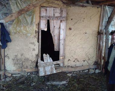 Buzău: Un urs a atacat o gospodărie şi a ucis mai multe oi şi miei, deşi animalul...