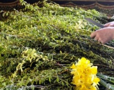 VIDEO | O tara intreaga a prins viata, astazi, in duminica Floriilor, de la ramurile...
