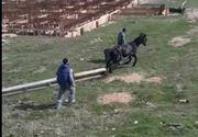 VIDEO   Spectacol macabru transmis, în direct, pe o rețea de socializare! Mai mulți indivizi torturează un cal