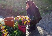 O bătrână care vindea flori, spulberată de o mașină