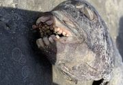 Creatură ciudată descoperită pe o plajă din SUA