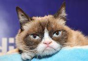 VIDEO | Grumpy Cat, unul dintre animalele de companie cele mai cunoscute în mediul online, a murit