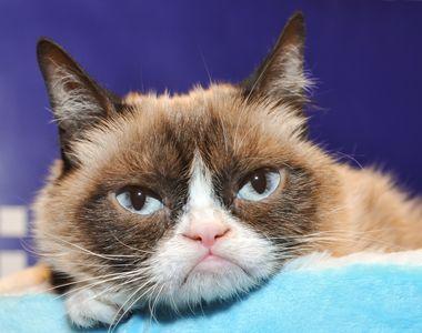 VIDEO | Grumpy Cat, unul dintre animalele de companie cele mai cunoscute în mediul...