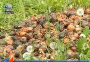 VIDEO | Aruncăm fructele românești și importăm de la străini