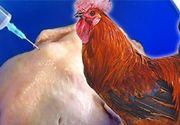 VIDEO | Cum deosebim carnea de pui crescut cu antibiotice de cea a unuia de curte