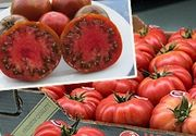 VIDEO | Scandalul rosiilor coapte fortat. Ministerul Agriculturii reactioneaza