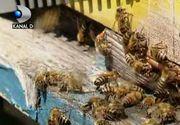 VIDEO | Disparitia albinelor aduce foamete