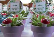 VIDEO   Plante suculente pentru clienți comozi