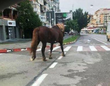 Un cal a ajuns să se plimbe, liber, în centrul municipiul Botoşani