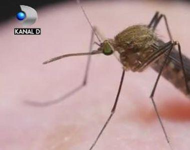 VIDEO | Invazia țânțarilor. Cum ne putem apăra