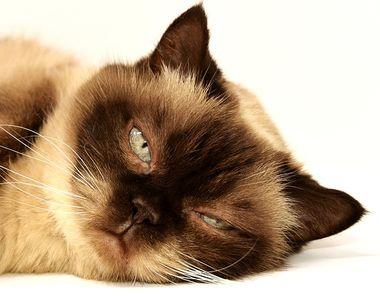 Un român prins în Italia încercând să mănânce o pisică moartă