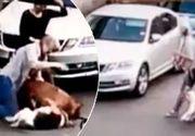 VIDEO | Primele măsuri după atacul feroce al Amstaff-ului