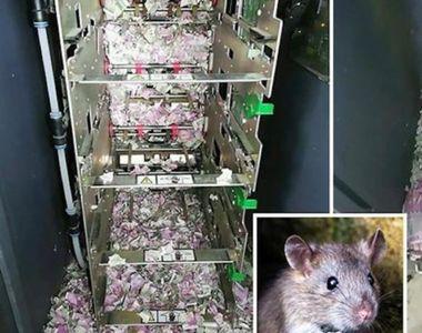 Un șoarece a intrat într-un ATM, a mâncat 18.000$, iar apoi a murit