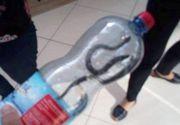 Un şarpe a fost prins într-un mall din Târgu Jiu