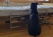 Fotografia care a făcut înconjurul lumii: Povestea impresionantă a câinelui loial care își așteaptă stăpânul decedat