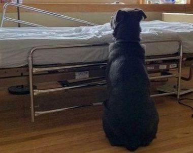 Fotografia care a făcut înconjurul lumii: Povestea impresionantă a câinelui loial care...