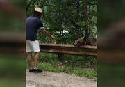 VIDEO | Imagini virale cu turiști care hrănesc urși. La ce pericol se expun