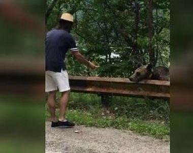 VIDEO   Imagini virale cu turiști care hrănesc urși. La ce pericol se expun