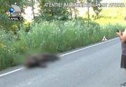 VIDEO | Moartea misterioasă a unui pui de urs. Localnicii l-au găsit prins într-o capcană