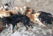 Imagini şocante! Festivalul chinezesc unde sunt servite preparate din carne de câine