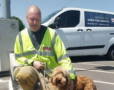 Incredibil! Stăpânul și-a lăsat câinele în mașină timp de o oră. Cum a fost găsit de...