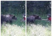 Imagini înfricoşătoare în Argeş: O fetiţă e încurajată de părinţi să dea de mâncare unui urs. Ce a urmat