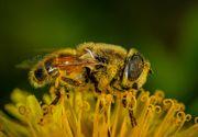 Ce este polenul crud si ce beneficii ofera