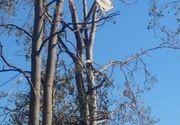 Imaginea zilei după furtuna din Halkidiki. Un șezlong luat de vânt a ajuns într-un copac