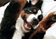 Un câine locuiește într-un hotel și are cea mai adorabilă meserie