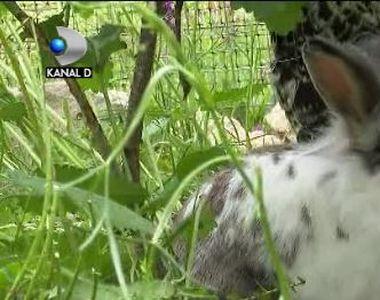 VIDEO | Ferma animalelor de la Zărnești, adevărată atracție pentru cei mici