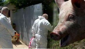 VIDEO | Problemele cauzate de pesta porcina revin in atentia autoritatilor si a gospodarilor
