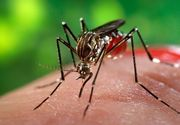 Primul caz de infecţie cu virusul West Nile în acest sezon, la un bărbat din judeţul Galaţi