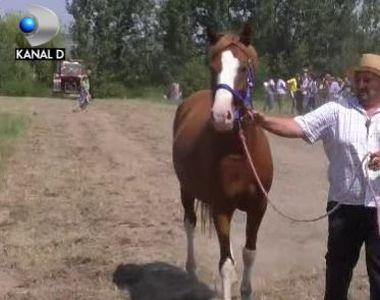 VIDEO   Zeci de cai putere au incantat privirile spectatorilor in apropierea orasului...