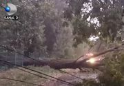 VIDEO | Furtuni de cod portocaliu. Vijeliile au smuls din loc semafoare și copaci