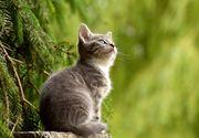 6 boli grave pe care le pot transmite pisicile oamenilor