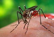 Unsprezece cazuri de infecţie cu virusul West Nile, înregistrate în acest sezon; două persoane au murit până în prezent