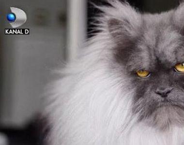 VIDEO   Juno, noul Grumpy Cat