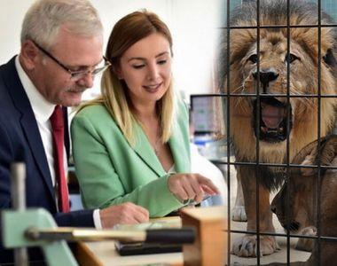 """Iubita lui Liviu Dragnea a semnat o petiţie pentru eliberarea animalelor: """"Stau în..."""