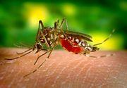 Nouăsprezece cazuri de infecţie cu virusul West Nile, înregistrate în acest sezon; două persoane au murit până în prezent