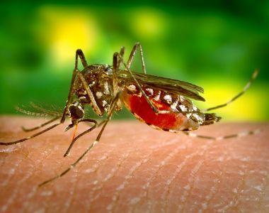 Nouăsprezece cazuri de infecţie cu virusul West Nile, înregistrate în acest sezon; două...