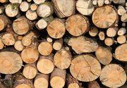 Tăietori de lemne în Austria. Nicu și Vasile, tinerii maramureșeni au avut parte de un sfârșit tragic